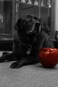Mocha-dog